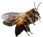 bee-dead-4