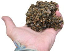 dead bee 15
